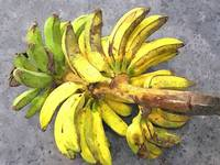 Bunch of banana 1