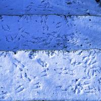 Blue Snow Bird Tracks