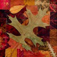 Fall Leaves Collage 2004