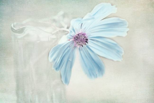 Soft Blue Flower