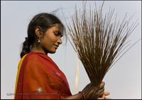 After threshing rice harvest, rural Bihar, India