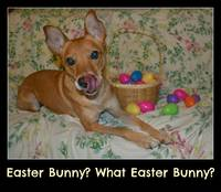 What Easter Bunny?