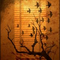 Through the Window Art Prints & Posters by Ruby Guitard