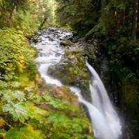Forest Falls by Jen Wheeler