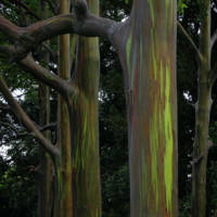 Painted Trees by Thirteenth Avenue Photography