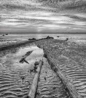 The Leading | Kelanang Beach | Black and White