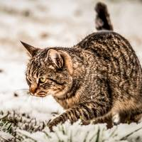 cat in the snow by Alexandr Grichenko