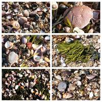 Seashells and Rocks Collage by Carol Groenen