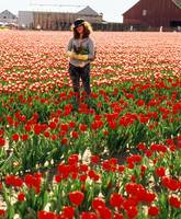Tulip Picker