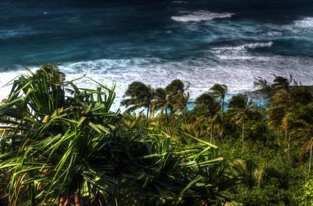 Wind-swept Palms