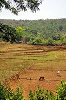 Fields of Goa