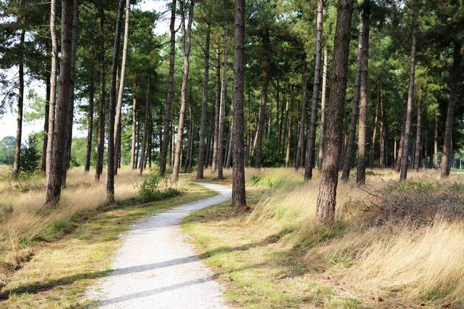 Dutch Country Bicycle Path