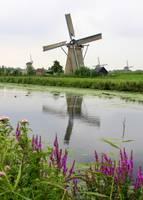 Windmills of Kinderdijk with Flowers by Carol Groenen
