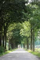Dutch Landscape - Country Road by Carol Groenen