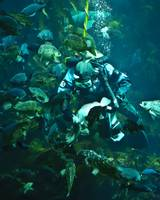 Diver Feeding Fish(Org)
