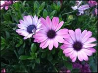 Happy Trio by Giorgetta Bell McRee