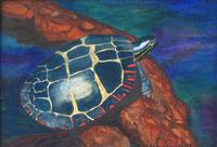 Painted Turtle II