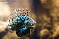 Lion Fish - Aquarium of Barcelona