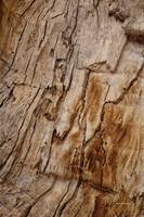 Texturized wood bark