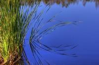 Sawgrass (IMG_0020) by Jeff VanDyke