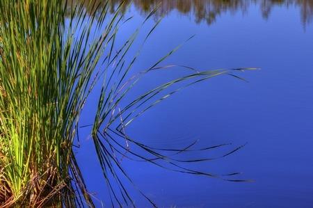Sawgrass (IMG_0020)