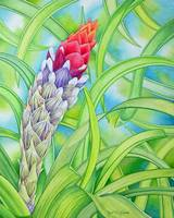 Tropical Bromeliad