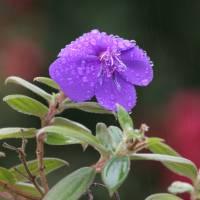 Purple Rain by Jen Wheeler