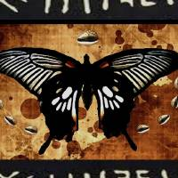 Black Butterfly Art Prints & Posters by Abena Kaashe