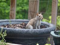 potted squirrel enhanced 72