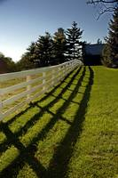 Shadow and Horse Fence 8863