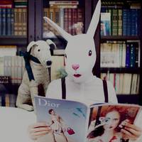 socrat dog and the white rabbit in library