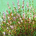 Plein Air Garden Series, No 3 by Jennifer Lommers