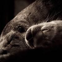 Otters by Jen Wheeler