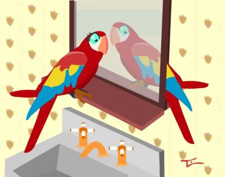 Parrot in Mirror