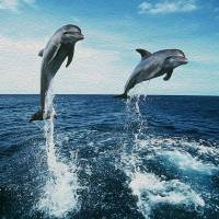 Double Dolphin Air by John Tribolet