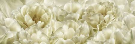 Ivory White TulipsScape