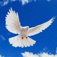 White Dove On Sky by John Tribolet