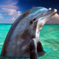 Dolphin Portrait by John Tribolet