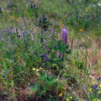 Seattle Wildflowers - 2 by Patricia Schnepf
