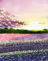 Field of Lilac