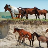 Gurdians Of The Prairie by Jim Westin