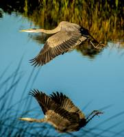 Reflective Flight