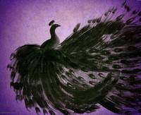 BLACK PEACOCK in PURPLE