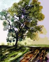 Oak Tree In Later Summer Landscape