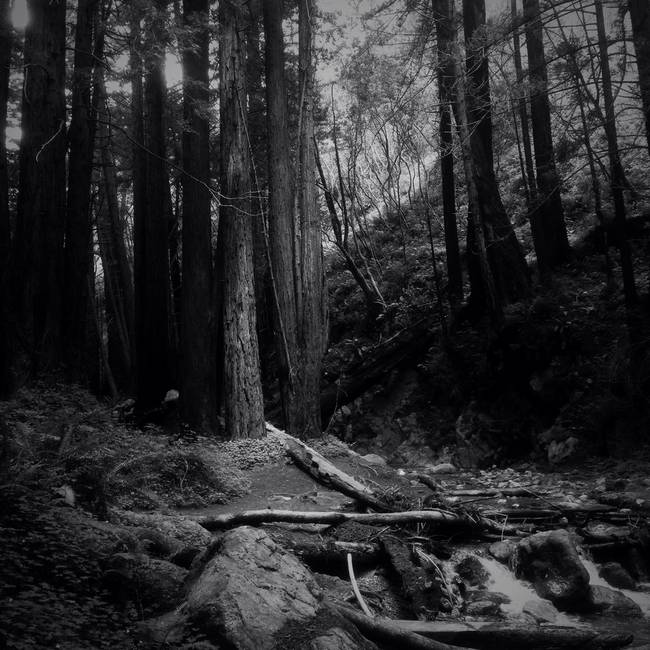 Quiet moment on the Limekiln trail