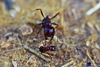 Big Ant Little Ant