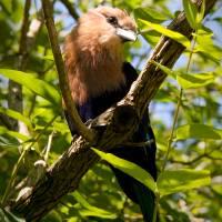 Zoo Bird by Jen Wheeler