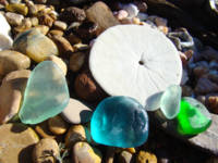Seaglass Beach Rock Garden art prints Shells