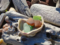 Beach Shells Seaglass art prints Driftwood