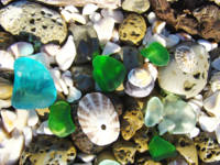 Coastal Beach Sea Glass art prints Shells Fossils